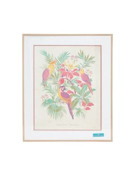 Butterfly Home By Matthew Williamson   Parrot Wall Art And Frame by Butterfly Home By Matthew Williamson
