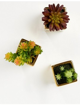mimo-by-premier-set-of-3-mini-succulents-in-gold-ceramic-pots by asos-brand