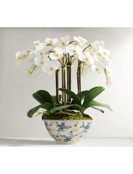 Faux Orchid In Rose Trellis Bowl by Pottery Barn