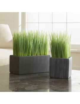 Potted Grasses by Crate&Barrel