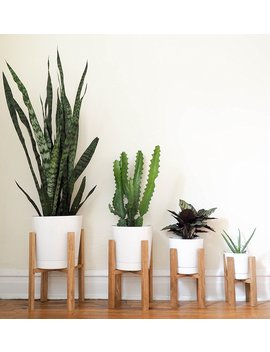 Mid Century Modern Plant Stand by Amazon