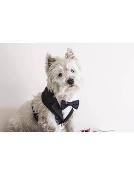 Formal Dog Tuxedo Harness, Wedding Tuxedo For Dogs, Custom Made Tuxedo, Dog Wedding Attire, Suit For Dog, Dog Bearer, Choice Color Bowtie by Etsy