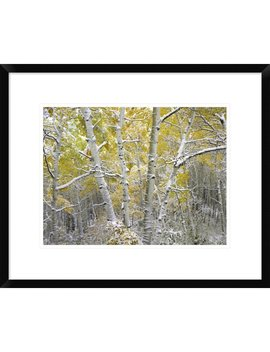 Global Gallery 'quaking Aspens Near Kebbler Pass, Gunnison National Forest, Colorado' Framed Photographic Print by Global Gallery