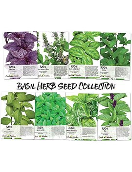 Basil Seed Packet Collection (8 Individual Seed Packets) Non Gmo Seeds By Seed Needs by Seed Needs