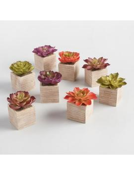 Mini Faux Fall Succulents In Square Pots Set Of 8 by World Market