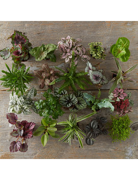 Foliage Collection by Terrain