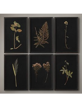 Hand Pressed Botanicals On Linen Black by Restoration Hardware
