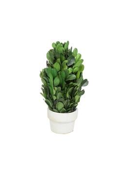 Small Boxwood Cone Topiary By Ashland® by Ashland