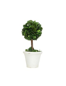 Tabletop Potted Lollipop Boxwood By Ashland™ by Ashland