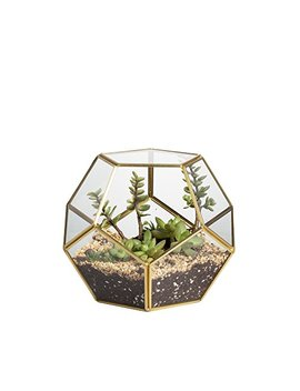 Ncyp Brass Glass Pentagon Regular Dodecahedron Geometric Terrarium Container Desktop Planter For Succulent Fern Moss Air Plants Holder Miniature Outdoor Fairy Garden Gift by Ncyp