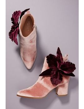 Cecelia New York Mirah Boots by Cecelia New York