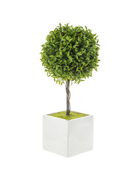 Capsicum Leaf Topiary   Small by Hobby Lobby