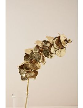 Gilded Faux Orchid Stem by Anthropologie