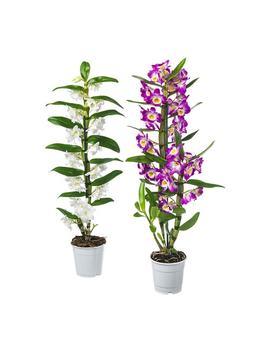Orchidaceae by Ikea