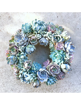 Succulent Wreath In Shades Of Lavender And Blue, Laura Wreath, Mother's Day Gift, Living Wreath, Wedding Day Wreath, Housewarming Gift, by Succulent Art Works