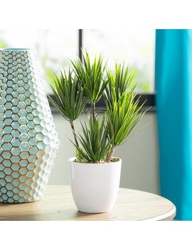 Mercury Row Minimalist Alocacia Desktop Succulent Plant In Pot & Reviews by Mercury Row