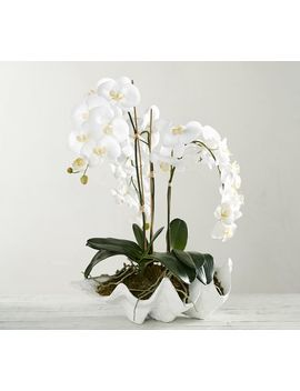 Faux Potted Orchid In Clam by Pottery Barn