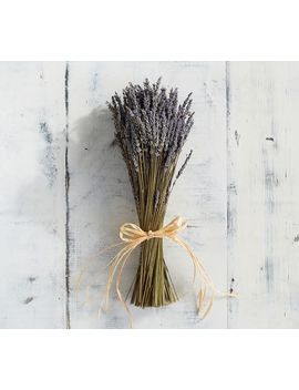 Live Lavender Sheaf by Pottery Barn