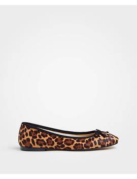 Matilde Leopard Print Haircalf Bow Flats by Ann Taylor