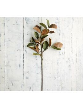 Faux Magnolia Leaf Branch by Pottery Barn