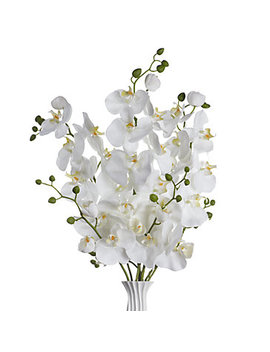 Phalaenopsis Spray   Set Of 3 by Z Gallerie
