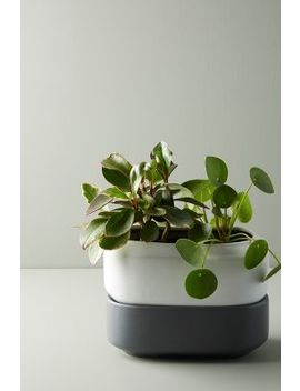 Chef'n Self Watering Herb Planter by Anthropologie