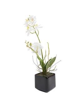 Wilko Artificial Orchid In Ceramic Pot by Wilko