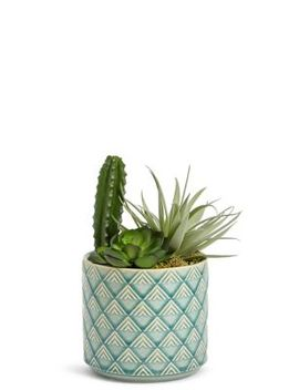 Cactus Selection In Ceramic Pot by Marks & Spencer