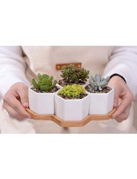 4 Hexagon Ceramic Succulent Pots Set / Ceramic Planter, Bonsai Pot, Ceramic Plant Pot, Succulent Planter, Geometric Planter, Cactus Planter by Cosyspot