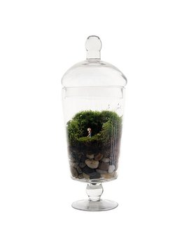 Grow Old With You Terrarium by Michelle Inciarrano &Amp; Katy Maslow