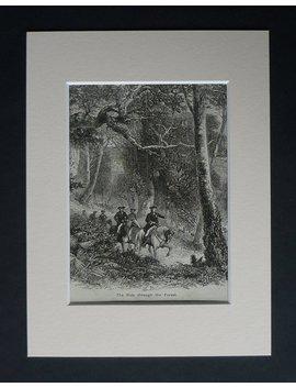 1880er Jahren Antike Verfilzten Natur Bild Einen Ausritt Durch Den Wald by Primrose Prints