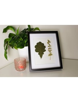 Pressed Oak And Emerald Gaiety Leaves by Pretty Thoughtful Shop