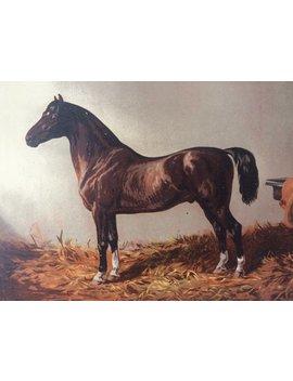 1875 Original Antiken Verfilzten Lithographie   Pferd   Reit Dekor   Dekorative Wandkunst   Wand Dekor   Pferde Wandkunst   Geschenk Idee by Ninska Prints