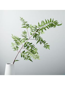 Faux Botanicals   Large Fern by West Elm