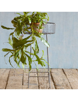 Round Basket Plant Stand, Large by Terrain