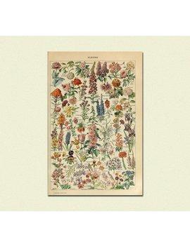 Impression Fleur Vintage 1909   Adolphe Millot Affiche Home Decor Botanique Impression Illustration Florale Romantique Larousse Idée Cadeau D'anniversaire by Vintage Wall Graphics