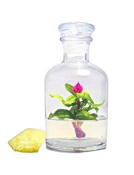 "Bloomify Celosia Flower Terrarium, Zero Care, Cockscomb, 4"" Jar by Bloomify"