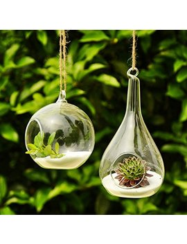 Siyaglass 2/Packing Hanging Terrarium Glass Vase Flower Plant Decoration  Orb And Teardrop by Siyaglass