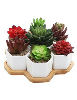 Set Of 7 Hexagon Shaped Ceramic Succulent Planters, Geometric Plant Pots With Bamboo Tray by My Gift