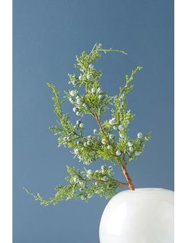 Juniper Branch by Anthropologie