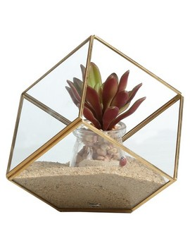 "Brass And Glass Terrarium Cube Clear 8.5""   Danya B by Danya B."
