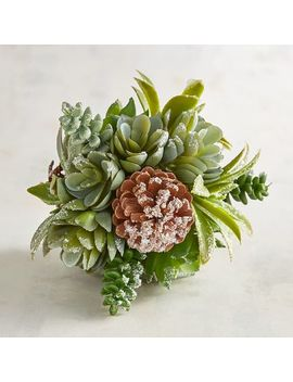 Frosted Succulent Decorative Sphere by Pier1 Imports