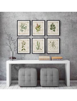 Herbs Print, Kitchen Wall Art, Botanical Poster, Herb Poster, Herbs And Spices, Kitchen Herbs Art, Kitchen Decor, Vintage Illustration by Etsy