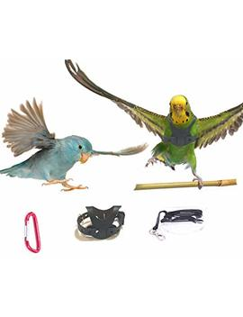 Avianweb Ez Rider Bird Harness With 8 Ft Leash by Avianweb