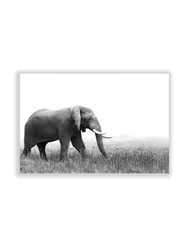 """Roaming Elephant"" By Two Palms Wall Art On Plexi, 30"" X 45"" by Two Palms Art Bazaar"
