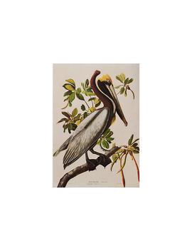 "Brown Pelican By Audubon, 1966 by [""Mira Parker, Design & Antiques""]"