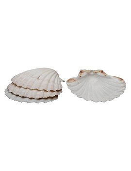 Hic Natural Baking Shells, 4 Inches, Set Of 4 by Hic Harold Import Co.