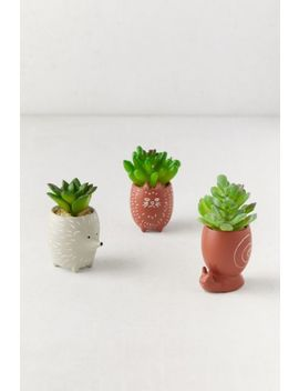 Tiny Animal Pot Faux Succulent by Urban Outfitters