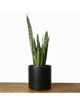 "Black Planter   Large Indoor Plant Pot | Flower Pot | Modern Planter   Ceramic Terracotta Pot (Black   6"", 8"" & 10"" Sizes) by Etsy"