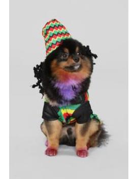 Rasta Pet Costume   Multi by Fashion Nova